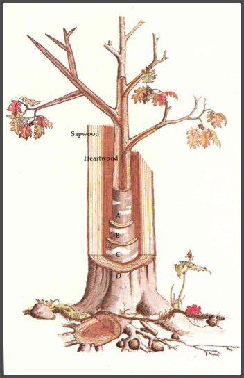 newwindow-lexpott-red-oak
