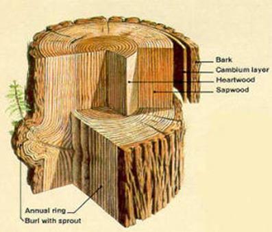 newwindow-lexpott-redwood-bark-rings