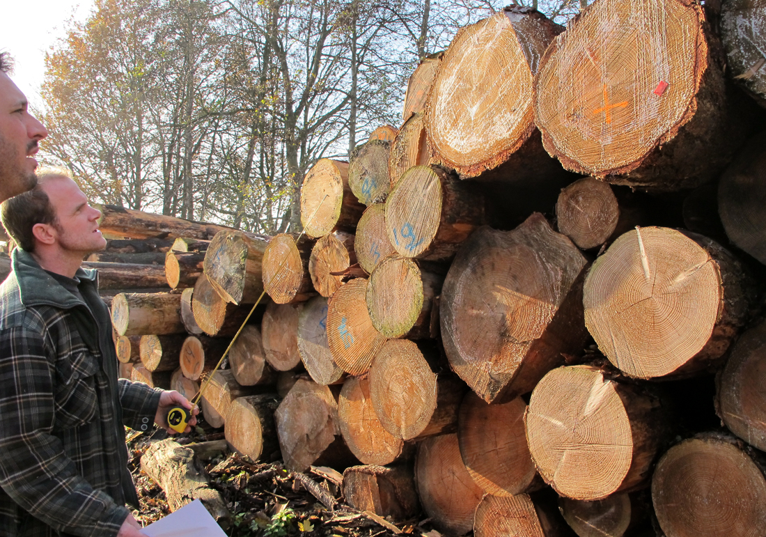 newwindow-choosing-cutting-sawing-1